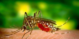 Комар, москит