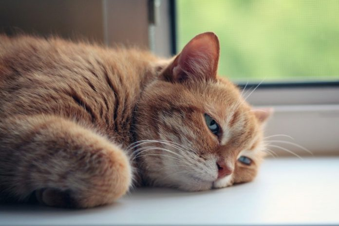 Рыжий кот, кошка, животные, приют для животных