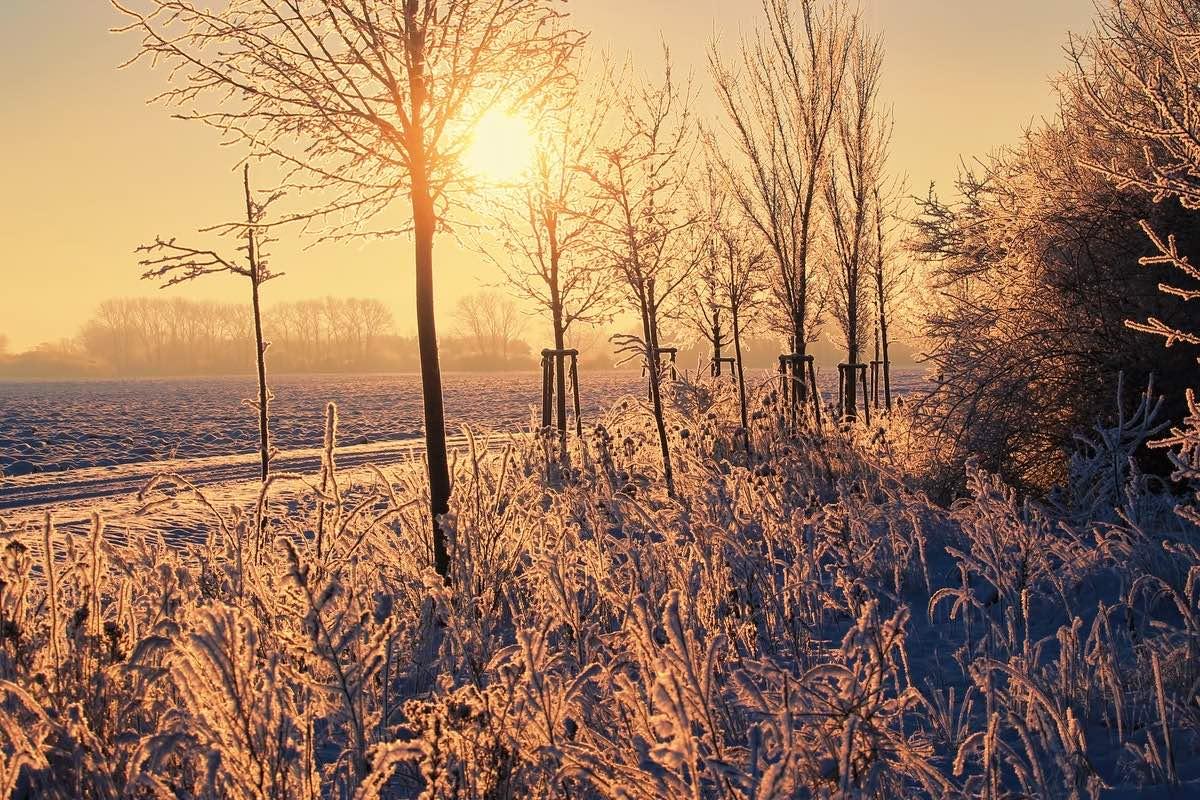 зима, холод, мороз, погода, солнце, ясная, деревья, иней