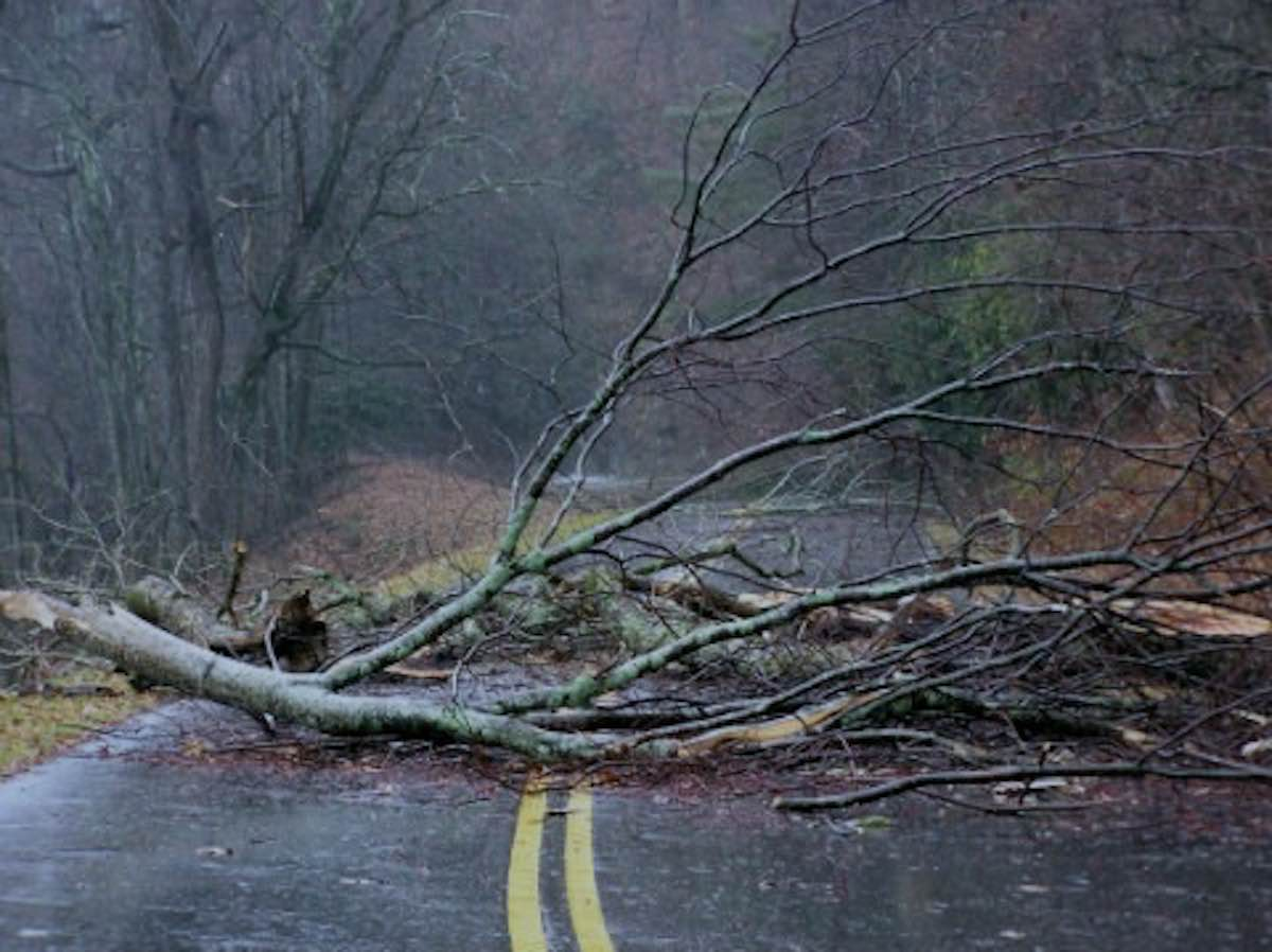 шторм, дорога, ветки, ветер, осень, зима, погода