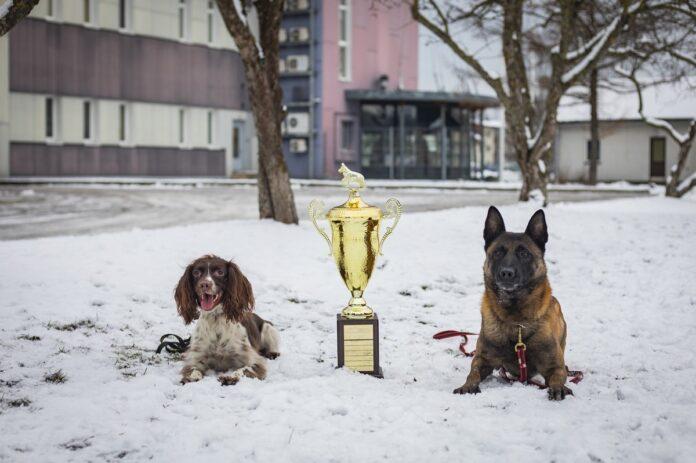 служебных собак