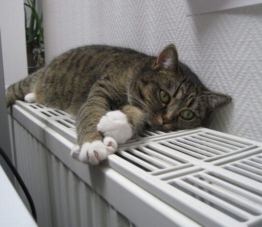 кот на батарее, отопление, тепло