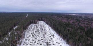 Вырубка леса, лес