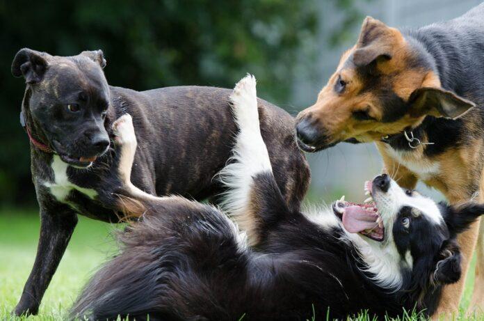 Собака, собаки